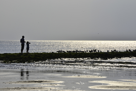 silhouette from father with child feeding the birds, Texel