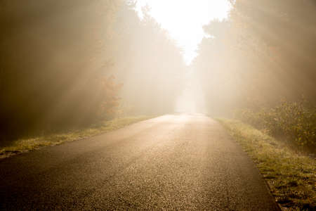 supernatural power: Beam of sun light comming though trees on an empty road Stock Photo