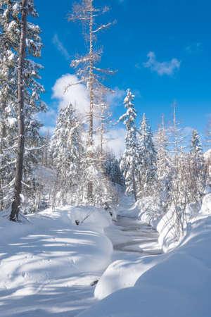 Kleiner Fluss in einem mit Schnee bedeckten Wald in einem schönen sonnigen Tag