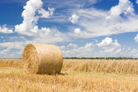 Hay roll on a meadow on a hot summery day with puffy clouds on a deep blue sky
