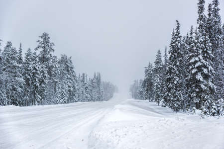 A road cutting through a forest covered with snow in a cold foggy winter day