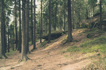 Bäume und riesige Felsen mit Moos auf einem Hang in einem Wald von Stolowe Mountains (Mount Sto rosa), Polen bedeckt