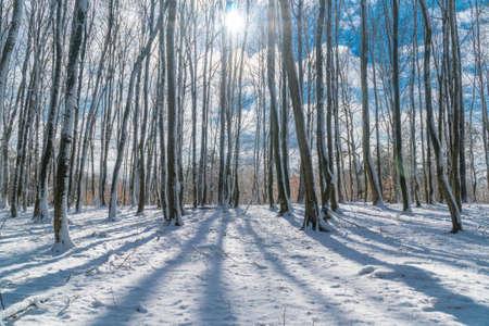 Bäume Gießen Schatten auf dem Schnee in einem hellen Wintermorgen