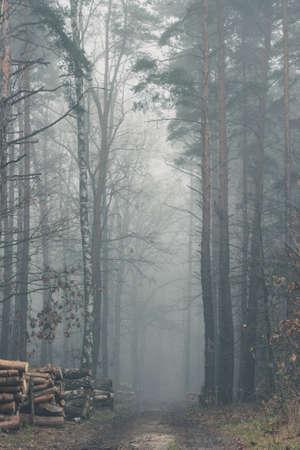 Stapel von Bäumen entlang einer Straße verschwinden in einem Nebel umhüllten Wald