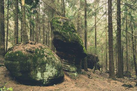 Riesige Bäume und Felsen bedeckt mit Moos in einem Wald von Stolowe Bergen (StoÅowe Gebirge), Polen