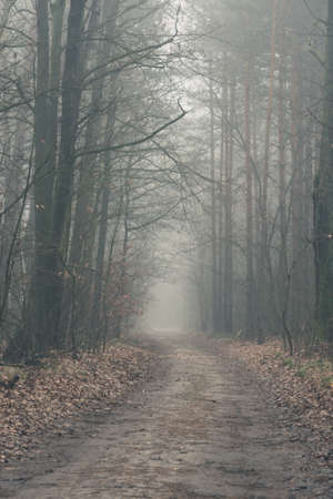 Disapearing in a fog road crossing a misterious forest