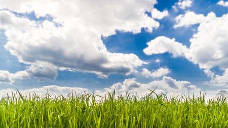 Deep blue sky with puffy clouds over a grass field Standard-Bild