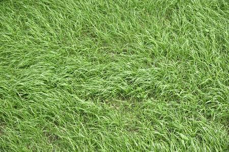 잔디의 질감