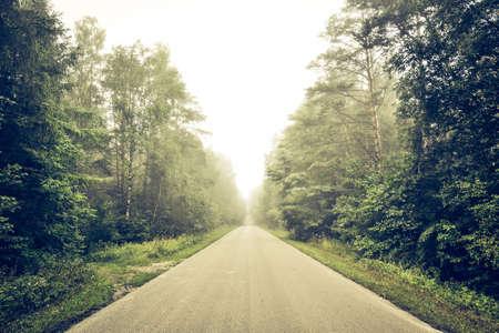 Empty road though forest Standard-Bild
