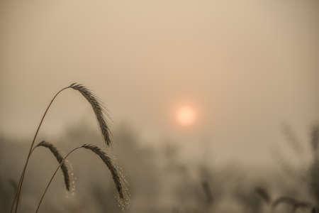 백그라운드에서 흐리게 필드와 밀의 블레이드의 근접 촬영보기