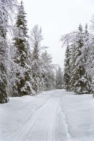 Empty road though forest Lizenzfreie Bilder
