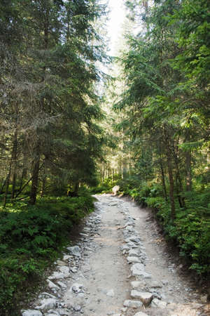 숲을 통과하는 길 스톡 콘텐츠