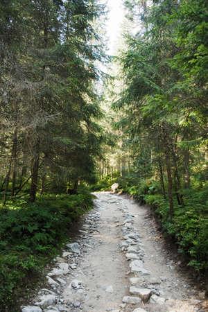 A path through a forest Standard-Bild