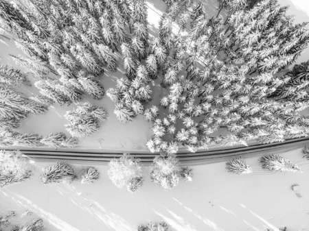A road between trees covered with snow. 스톡 콘텐츠