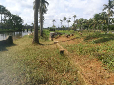 Ducks are coming down from their shelter to the lake for swimming near to the fields.The ducks are in a group of more than two and they are moving in a line.There are coconut trees near to the lake.