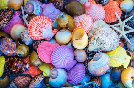 Close-up van kleurrijke zee schelpen in verschillende vormen