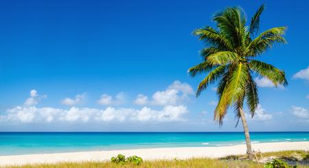 anguilla: Beach with beautiful high palm tree, Caribbean Islands Stock Photo