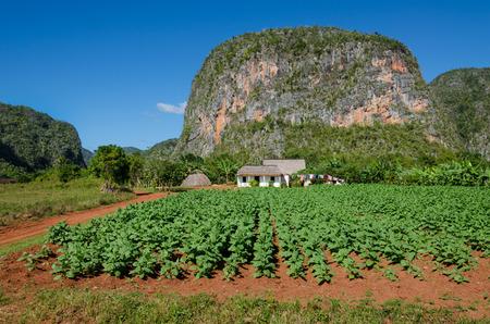 Typisch uitzicht op Valle de Vinales met boerderij en mogotes in Cuba