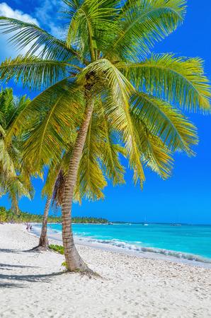 하얀 모래와 아름다운 야자수와 이국적인 카리브 해변