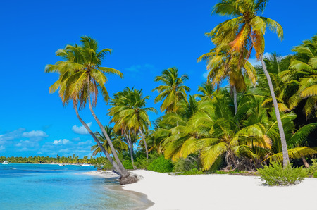 Amazing view of Caribbean beach with white sand and beautiful exotic palm trees