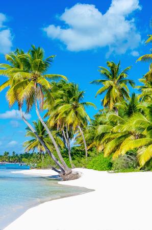 하얀 모래와 아름다운 이국적인 야자수와 카리브 해변의 놀라운보기 스톡 콘텐츠