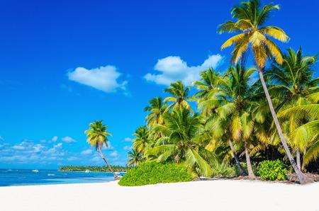 Verbazend tropisch strand met palmbomen het invoeren van de oceaan tegen azur oceaan, goud zand en blauwe hemel