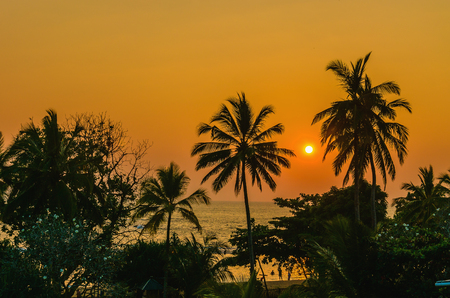 Romantic yellow sunset on a Caribbean beach full of tall palm trees photo