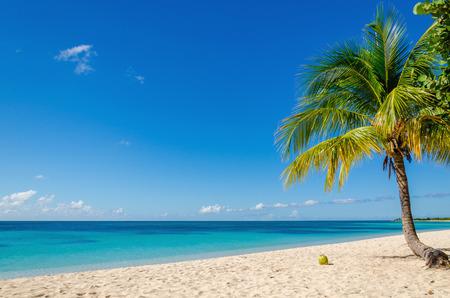 Exotisch zandstrand met palm en kokosnoot tegen blauwe lucht en azuurblauw water