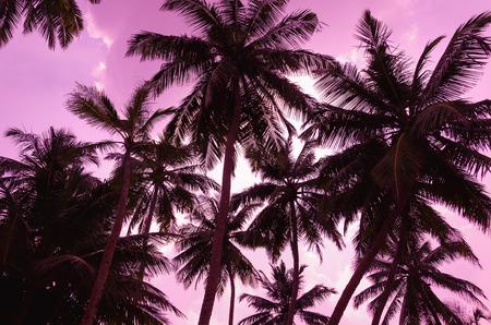 Twee palmbomen silhouetteren op zonsondergang tropisch strand