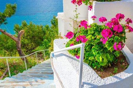 greek pot: Fiori rosa con le tipiche scale bianche in appartamento in riva al mare in Grecia