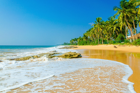 Amazing view of exotic sandy beach with high palm trees