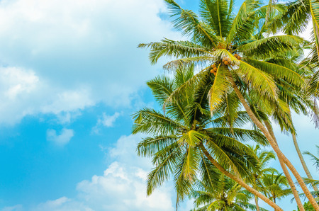 Geweldige zandstrand met kokospalm tegen de blauwe hemel Stockfoto