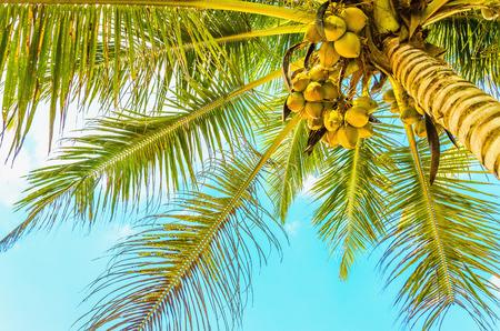 푸른 하늘에 대 한 코코넛 야 자와 함께 놀라운 모래 해변