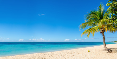 on palm tree: Amazing sandy beach with coconut palm tree and blue sky, Caribbean Islands