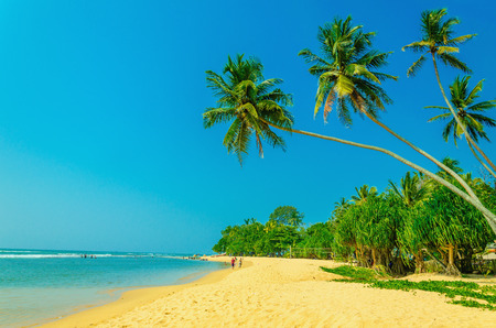 Amazing view of exotic sandy beach with high palm trees against blue sky, Sri Lanka