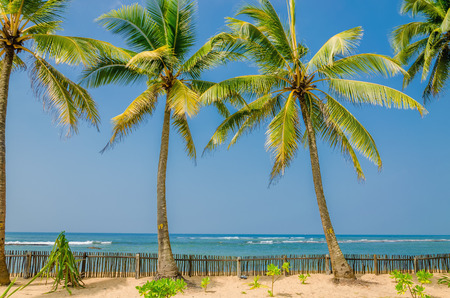 haiti: Exotic palm trees on a background of a sandy beach Stock Photo