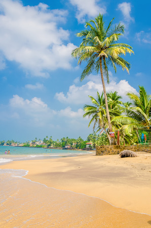 unforgettable: Unforgettable view, exotic palm trees against a sandy beach