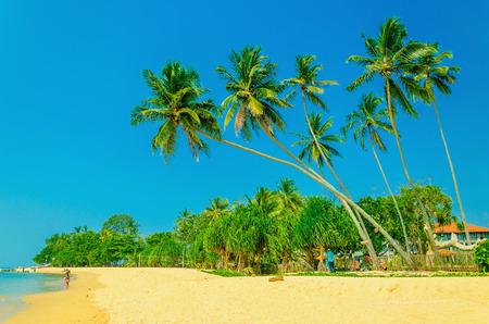 푸른 하늘에 대하여 높은 야자수와 이국적인 모래 사장의 놀라운 볼 수 있습니다.