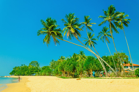 Amazing view of exotic sandy beach with high palm trees against blue sky