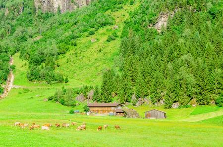 ows: Green alpine meadows, Zillertal area in Austria