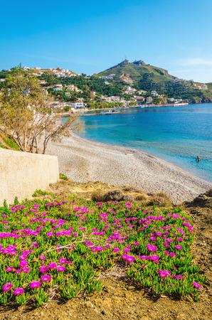Kleurrijke roze bloemen bij het zandstrand op het Griekse eiland Kos, Griekenland