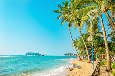 Beautiful paradise beach with tall palm trees on a background of golden sand and blue sky Stock Photo