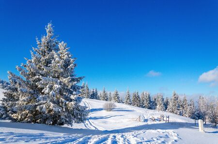 Beautiful winter mountain landscape with lots of snow and trees covered with snow on a background of blue sky on a beautiful sunny day