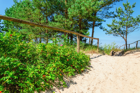 Beautiful entrance to the sandy beach from the forest Stock Photo