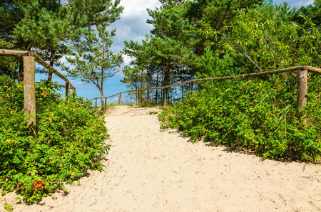 Beautiful entrance to the beach from the forest from sandy beach Stock Photo