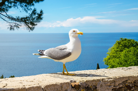 White seagull standing on a stone wall Stock Photo