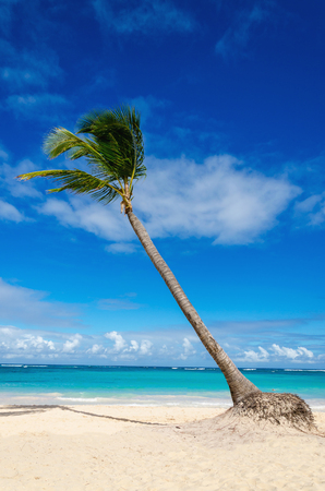 Amazing exotic beach with palm tree, Dominican Republic, Caribbean Islands Stock Photo