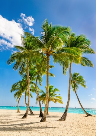 Exotische hoge palmbomen, wilde strand azuurblauwe wateren, Caribische Zee, Dominicaanse