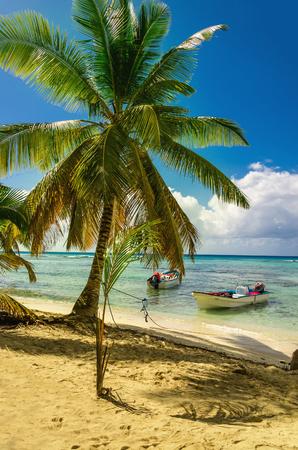 Verbazingwekkende palmboom op Caraïbisch strand met boot Dominicaanse Republiek, het Caribisch gebied Stockfoto