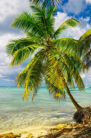 Beautiful exotic Caribbean coast with amazing palm tree, Dominican Republic, Stock Photo